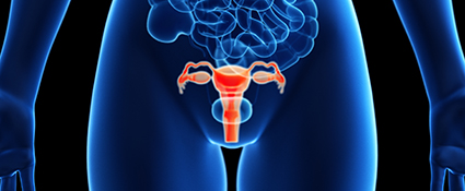 Endometrial image